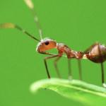 Formigas no Notebook e Pc: Saiba como Remover e Acabar com elas