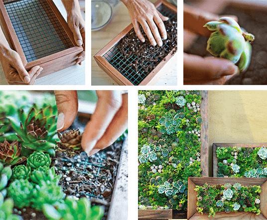 Cactus e Suculentas Jardinagem