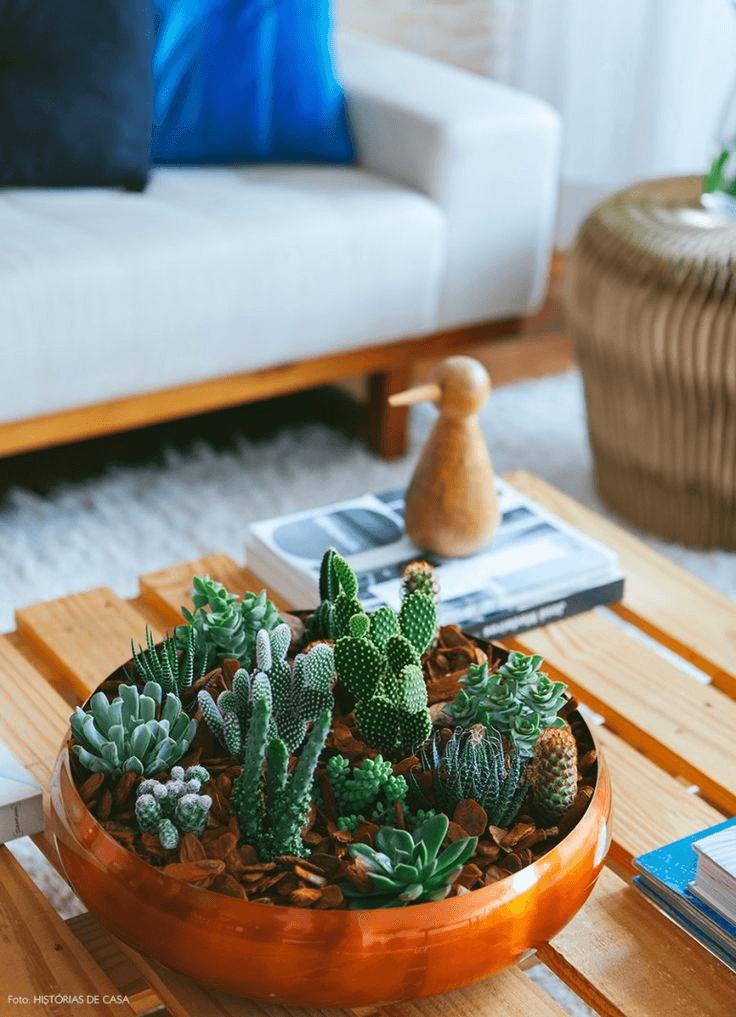 Cactus e Suculentas - Jardinagem e Decoração