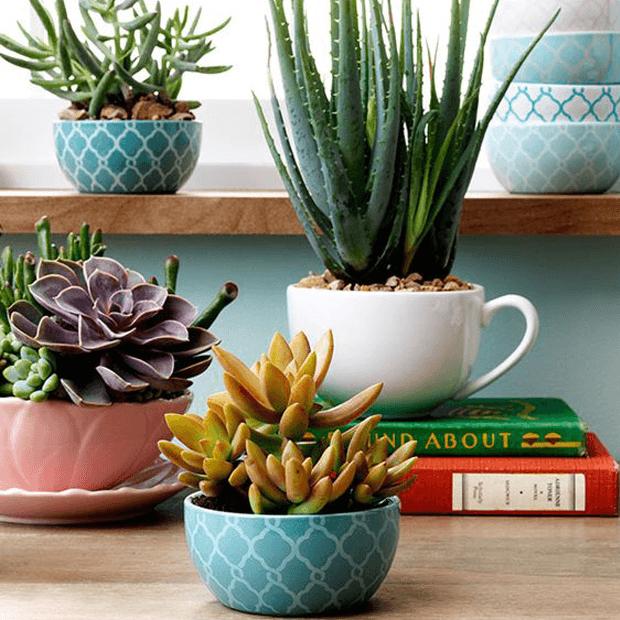cactos e suculentas na decoração e jardinagem