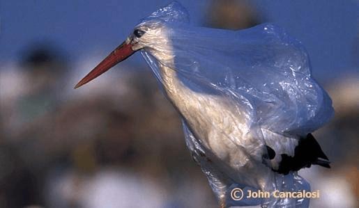 Poluição Ambiental e Suas Consequências