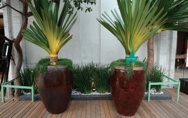 Vasos Decorativos Jardinagem